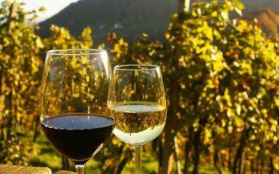 Vuoi andare sul sicuro per il vino della cena? Scegli la DOC Colli Euganei!